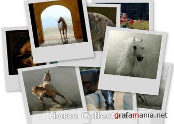 Atlantis Horse Collections