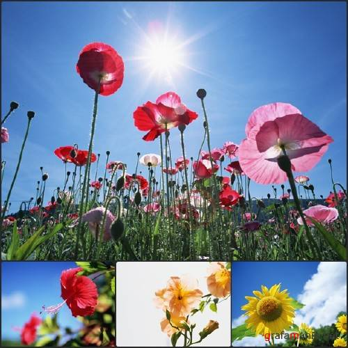 Blue Sky and Flowers Wallpapers