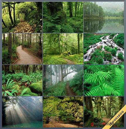 Forests Wallpapers