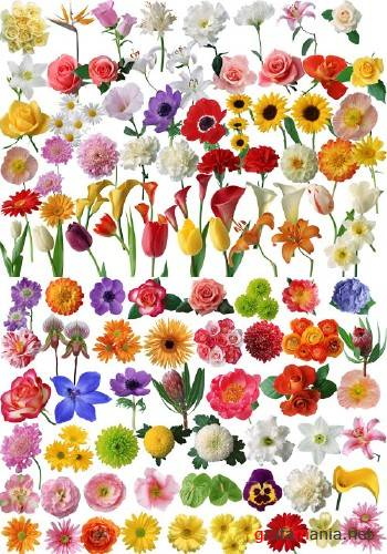 80 kinds of flowers