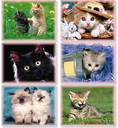 65 Cute Cats Wallpapers 1600X1200