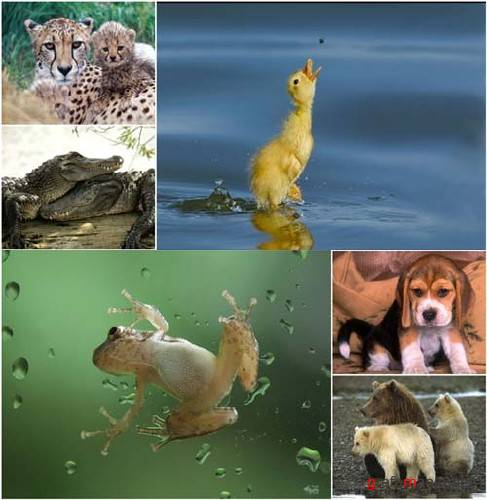 80 Animals Wallpapers