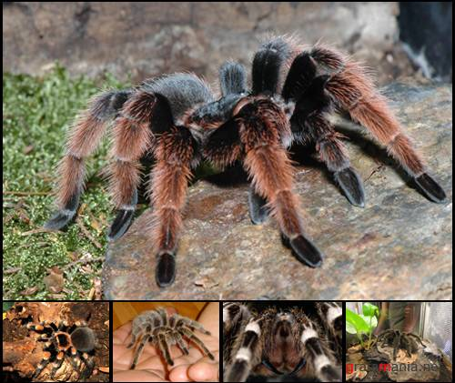 Tarantula Photo Pack