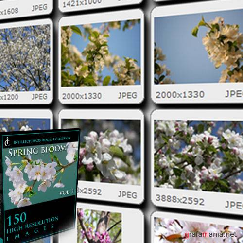 Images Collection - Spring Bloom vol.01