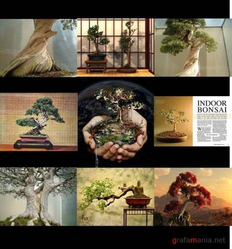 BONSAI wallpaper pack