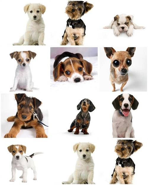 Awesome SS - Puppies