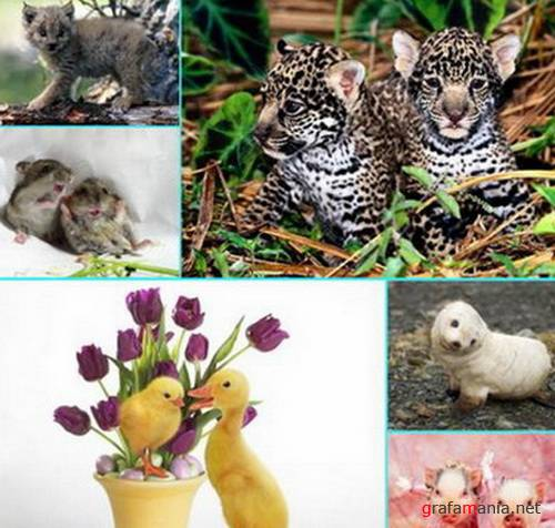 Child Animal Wallpaper