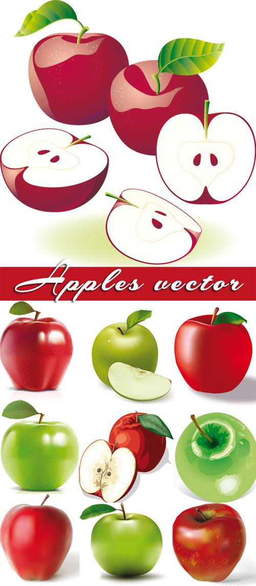 Apples - big vector collection
