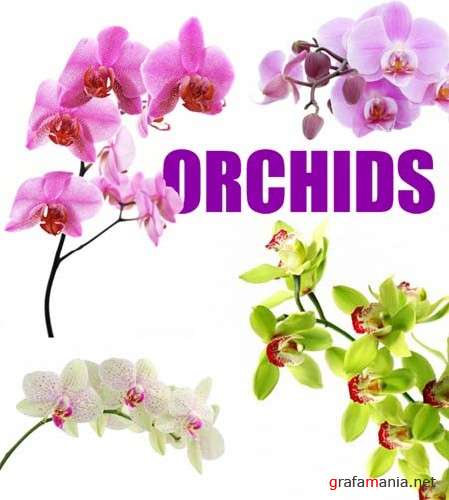 Orchids - HQ Stock Images