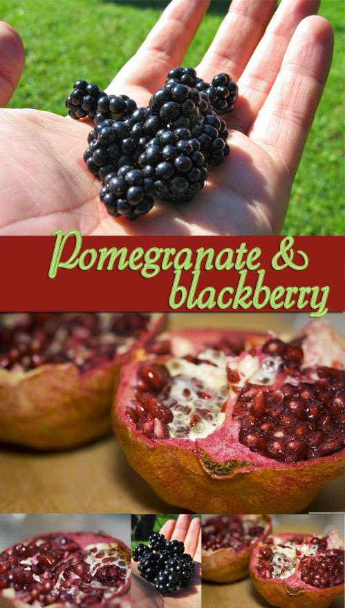 Pomegranate and blackberry