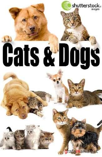 Cats & Dogs - HQ Stock Photos
