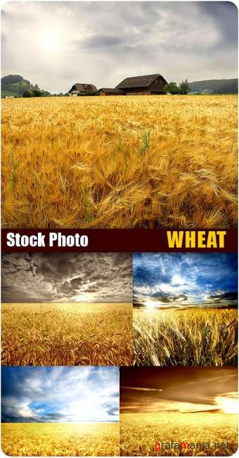Stock Photo - Wheat