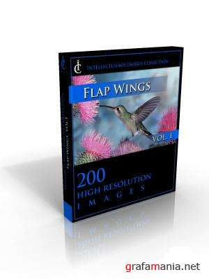 Intellectchaos Images Collection - Flap Wings vol.01