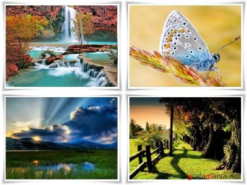 Wall-paper on a theme the nature release �1