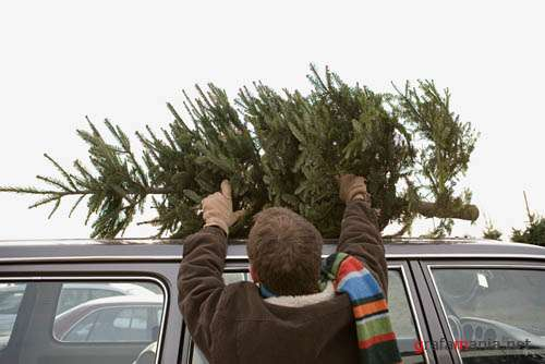 IS722 Christmas Tree Shopping