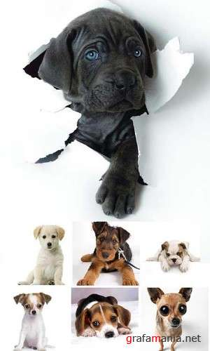 Puppies - HQ Stock Photos