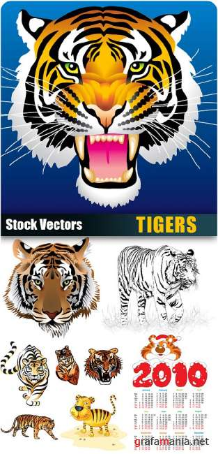 Stock Vectors - Tigers + 2010 calendar
