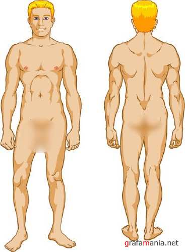 Men's body vector