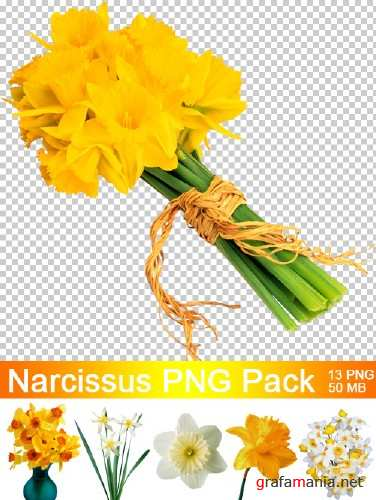 Narcissus - Нарциссы PNG