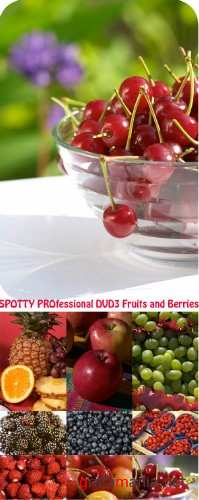 SPOTTY PROfessional DVD3 Fruits and Berries