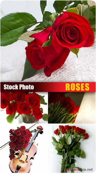 Stock Photo - Roses