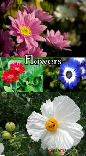 Flowers clipart 2