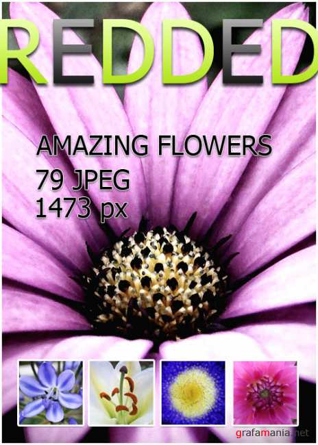 Amazing flowers - free clipart foto