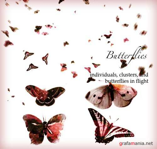 Brushes for Adobe Photoshop - Butterflies
