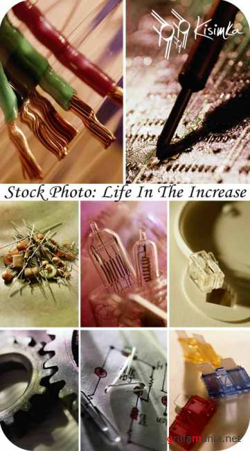 Stock Photo:  Life in the increase