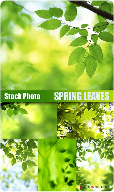 Stock Photo - Spring Leaves