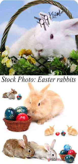Stock Photo: Easter rabbits