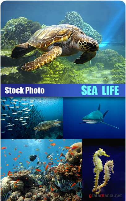 Stock Photo - Sea Life
