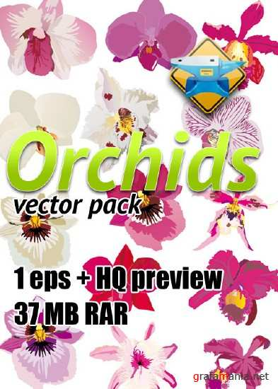 Orchids vector pack