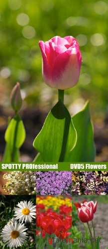 SPOTTY PROfessional DVD5 Flowers
