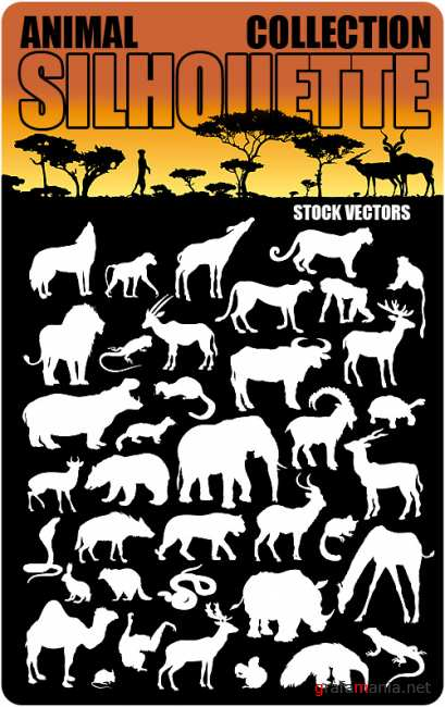 Stock Vectors - Animal collection