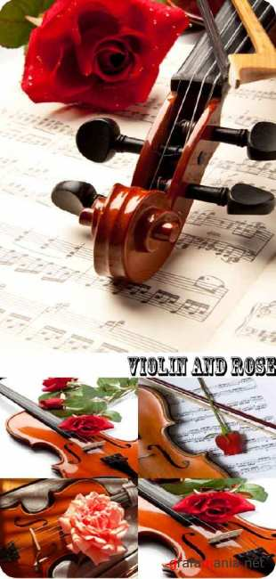Stock Photo: Violin and rose