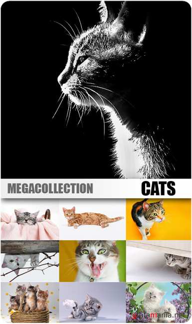 MEGACOLLECTION - Cats (Part#1)