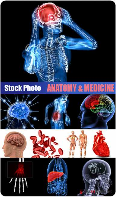 Stock Photo - Anatomy & Medicine