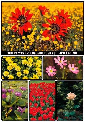 Flowers Clipart Collection