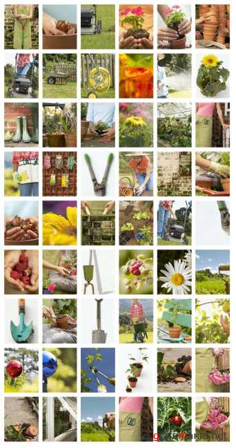 Stock Photo: Photography In the Garden