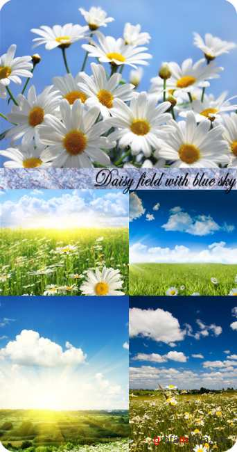 Stock Photo: Daisy field with blue cloudy sky