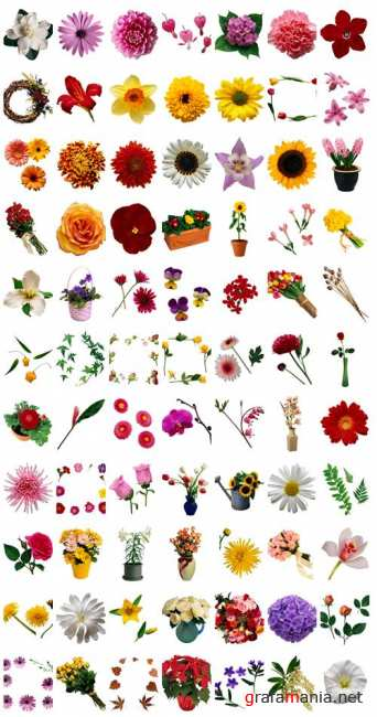 Stock Photo: Just Flowers