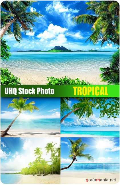 Stock Photo - Tropical