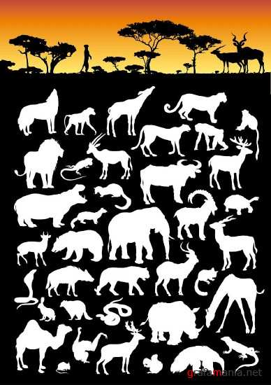 The collection of wild animals