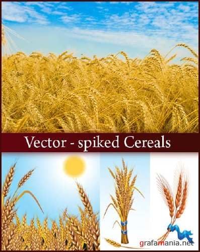 Vector - spiked Cereals