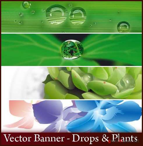 Vector Banner - Drops & Plants