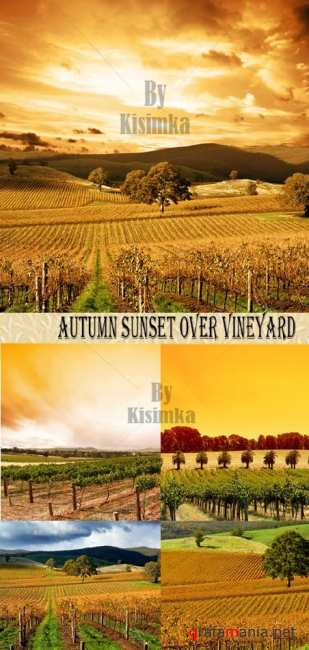 Stock Photo: Autumn Sunset over vineyard