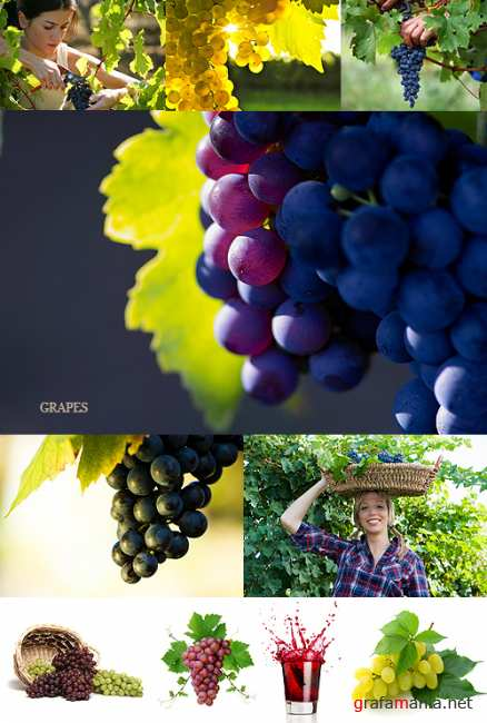 Stock Photo - Grapes