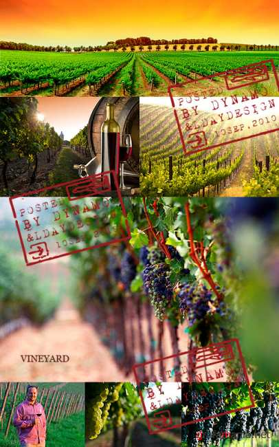 Stock Photo - Wine, vineyard and grapes