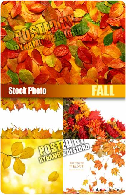 UHQ Stock Photo - Fall